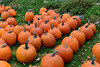 Pumpkins 2012 : A few from a nearby pumpkin farm with the 70-200 f2.8 VR and 50 f1.4 G on the D4.